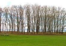 Thumbnail image for Trees in Formation.jpg