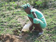 Haitian Girl Planting Tree.jpg